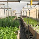 Как создать свою собственную ферму?