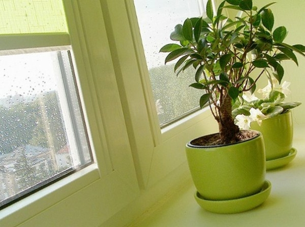 Чим корисні кімнатні рослини?