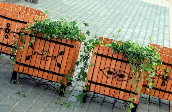 Як правильно вибрати контейнер для рослин